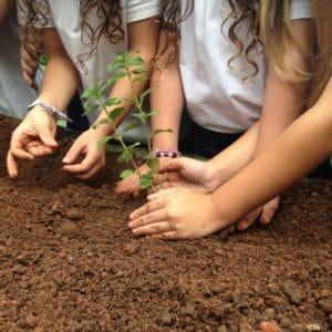 8 dicas para ensinar as crianças sobre sustentabilidade.